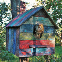 Barn Owl House