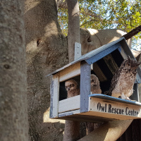 Spotted Eagle Owl House